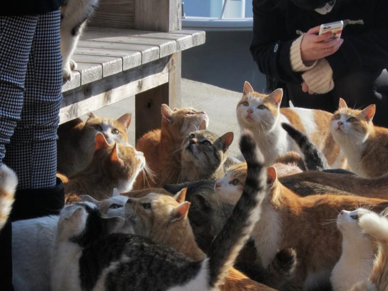 Cat island!