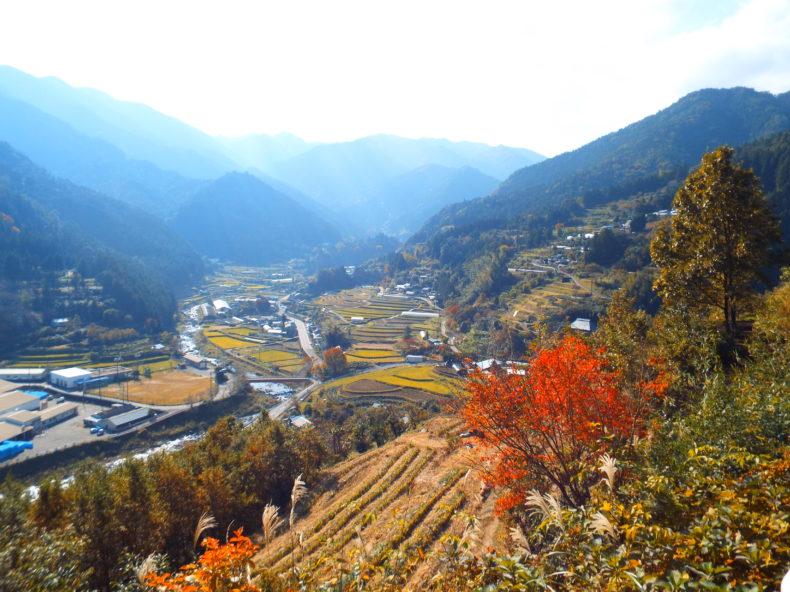 Rice field in Kamikatsu