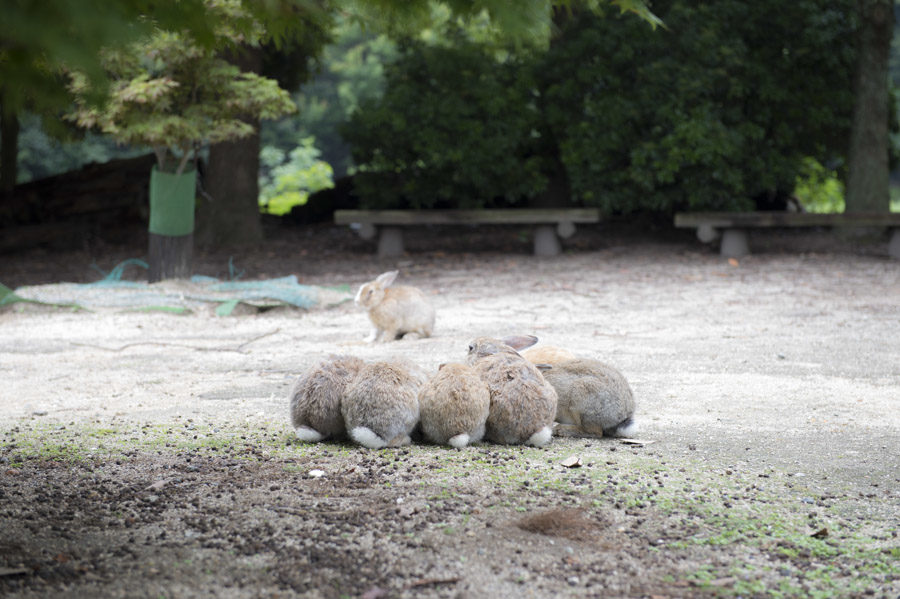 Rabbit group dynamics in action.