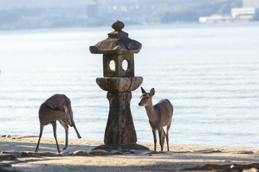 You can see Miyajima's friendly deer all around the island