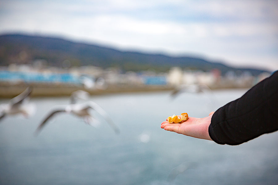 Breadcrumb-clad palms offer an opportunity to get up close and personal with local seagulls.