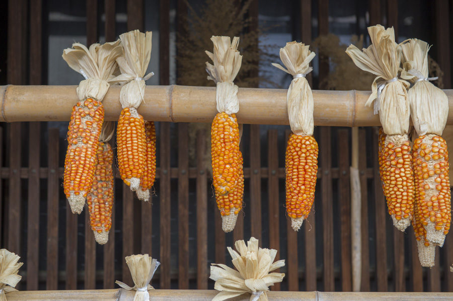 Corn hanging to dry outside.