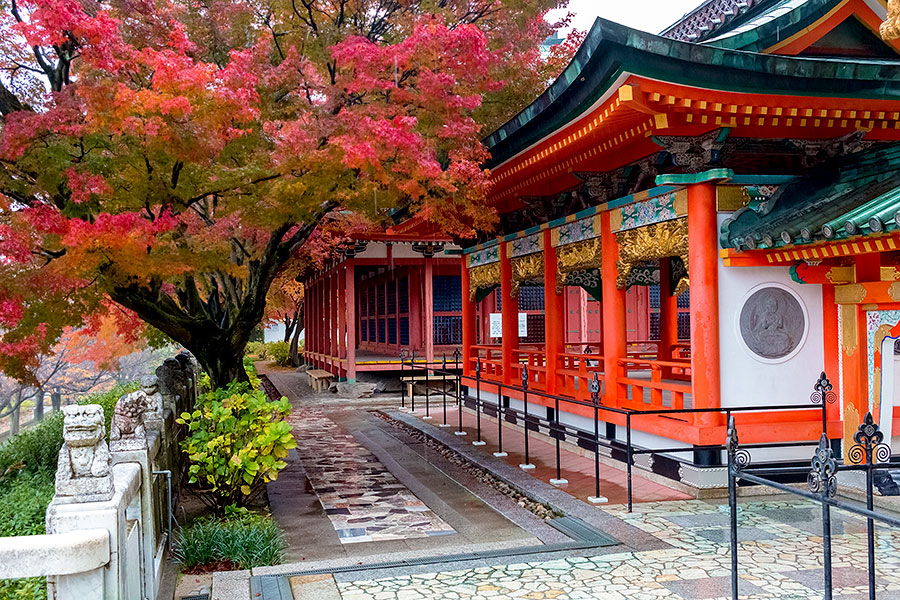 The fall colors are an exquisite addition to the already bright surrounds of Kosan-ji.